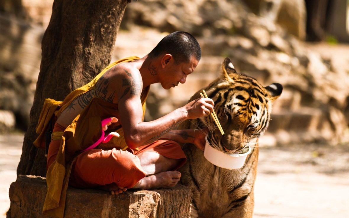 Tigre_oriente
